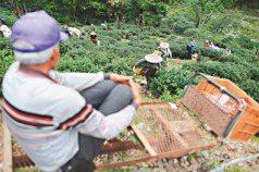山中聯合國 變形農業的黑牌軍