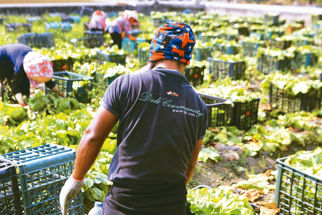 缺工困境下的公開祕密…失聯移工 農業隱形大軍