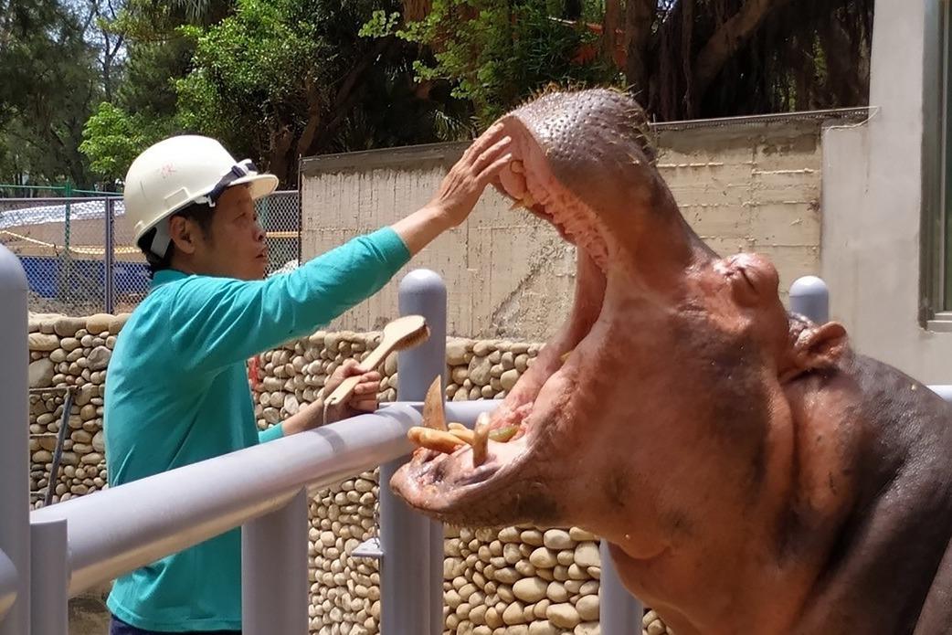 83歲新竹動物園重新開張!你所不知道四大改造玄機