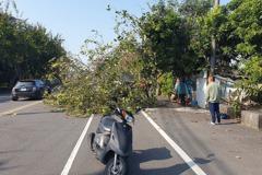 嘉義男子騎車載兒返校被倒塌路樹壓傷 兒毫髮無傷