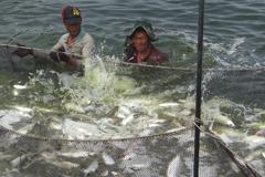 養殖漁業災損 富邦產險今日完成理賠