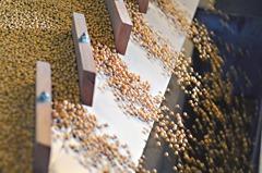 陸抗疫 進口美黃豆上周跌至10個月低位