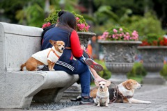 全球首例!三組專家鑑定 香港新冠肺炎病患寵物狗也確診