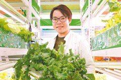 外婆的秋葵 讓科技人變農夫