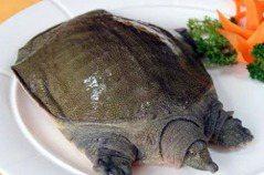 陸官方發通知:鱉、烏龜可供食用
