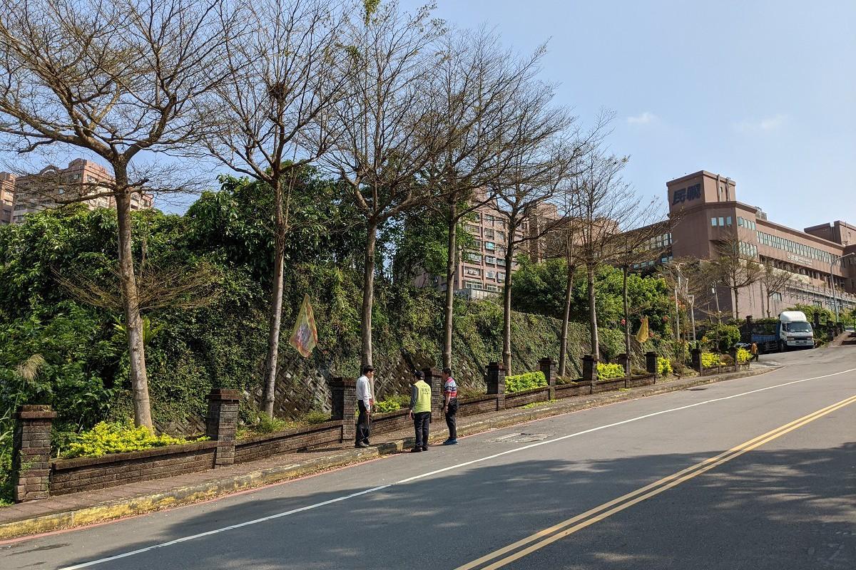 汐止人行道種大樹 地方盼修剪防颱風