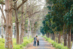 搶救熱島效應 為你我的未來種一棵樹