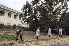 維持植樹節優良傳統 嘉南療養院種樹20多年綠蔭成林