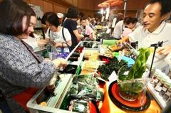 「人流管控、一律戴口罩」 SOGO:春季日本展如期舉辦