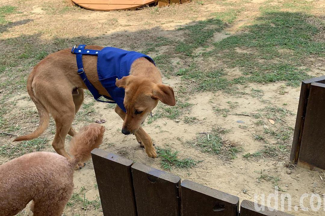 流浪犬晉升台南水道「園長」今授階 市長:年終要考核