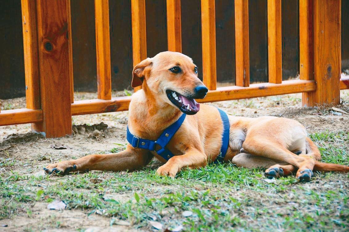 流浪犬 晉升台南山上水道館「園長」