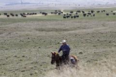 全美三分之一郡「零確診」85%在鄉村 專家擔心:恐篩檢不足