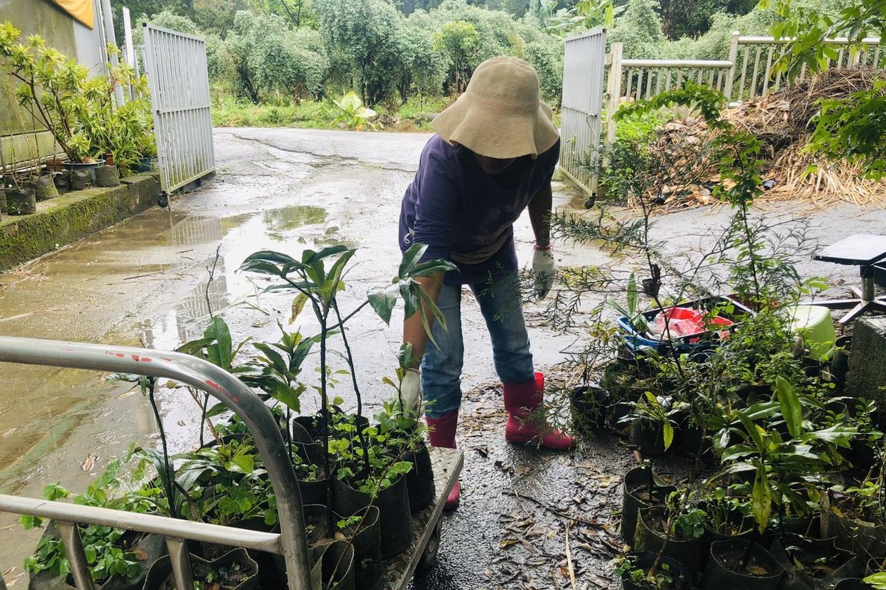 台灣愛心太強大 1.5萬株樹苗被富邦、台積電瞬間掃光