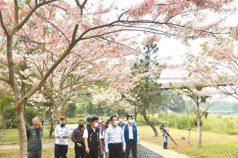 竹崎親水公園 徜徉粉紅花海