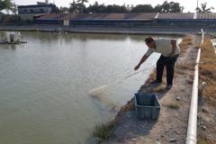 天災氣候異常 屏東養殖漁業保險多重保障