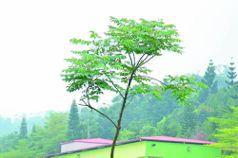 回響/為未來種一棵樹:百年大業 宏觀規畫