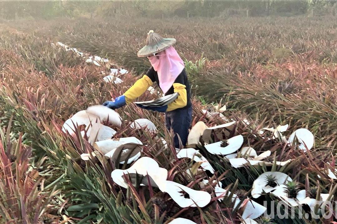 免申請!台南農民1萬元紓困金 首波11萬7千餘人已入帳