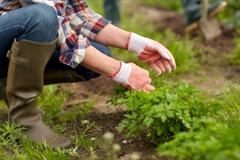 農地要做什麼才可以年收入超過60萬? 網曝1招:不只賺60萬