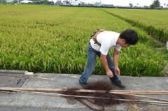 農民架設鳥網防吃稻穀 當心恐觸犯野保法