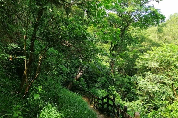 處處綠油油!遊走「18彎挑鹽古道」 彰化社頭清水岩步道群