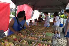 桃園拉拉山水蜜桃產量減半不夠賣 要買要快