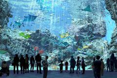 人氣爆炸!桃園「XPark」水族館首日搶票 一開放系統被塞爆
