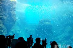 X-park水族館7日開幕 警提避塞車3招行車路線出爐