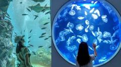 有一種藍叫洗版IG的「Xpark」藍!青埔最夯水族館必拍亮點+免費入場撇步,避開人潮先筆記