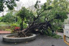 榕樹突塌壓死婦人 高雄宮廟賠償490萬獲緩起訴