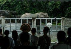 動物不是在動物園上班的社畜