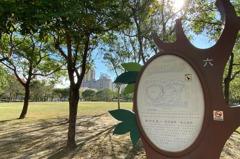竹北水圳森林公園草地音樂會 告五人、旺福將熱力開唱