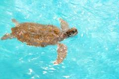 11隻瀕危綠蠵龜遭獵!割肉搗空龜殼現場煮食 棄屍河邊極恐怖