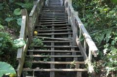 中市登山步道不少年久失修險象環生 觀旅局:改善中