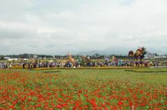 新社花海暨台中國際花毯節 盧秀燕:台灣的普羅旺斯