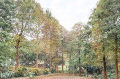 免跑中南部!台北南港麗山公園「落羽松秘境」變色了,還能順遊雙心跳石步道