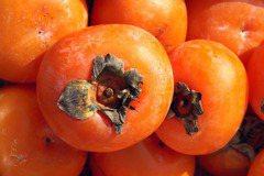 柿子、蛋白質一起吃肚子痛? 營養師告訴你為什麼
