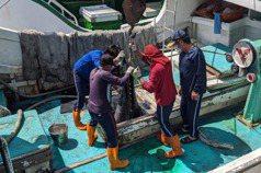指揮中心將暫停印尼移工來台 屏東勞動力充足無影響