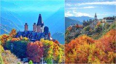 最美落羽松畫面!清境「落羽松城堡」山中歐式莊園+漸層樹海秒飛歐洲