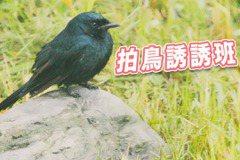 拍鳥誘誘班 解開保育和攝影之間剪不斷的結