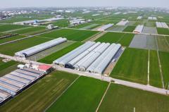 影/吸睛也吸金 太保市農會推有機稻引風潮 獲十大亮點