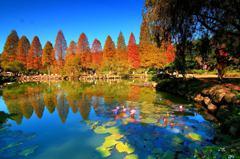 2大「糖果色落羽松」景點!新竹北埔湖邊倒影、苗栗三灣水上森林好療癒