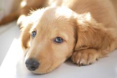 寵物知識+/毛孩生病怕荷包大失血?保險業務教你挑對寵物險有眉角