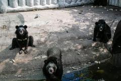 餓壞了?泰動物園解封重開 消瘦動物狂乞食引人擔憂