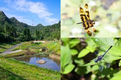 「內湖新秘境」蝴蝶翩舞好吸睛!北市首座蜻蛉主題園區,還可賞析超過40種蜻蜓