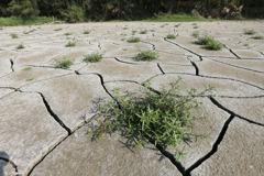 三管齊下 抗旱須長期準備