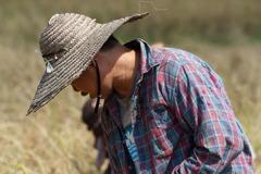 農產九成銷陸曝險 立委批台農發失職