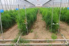 乾旱頻傳 台南農改場推廣「滴灌節水栽培」省水五成