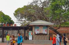 驚!台南鳳凰木傾倒 砸中安平古堡售票亭