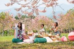 100株平地櫻花海出現 台東粉紅花海還有在地小農市集吃新鮮