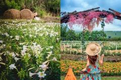 搭機捷能到!桃園「大古山野百合花季」登場 逾萬株雪白花朵+花海鞦韆必拍